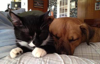 cat and dog sitter Schenectady and Niskayuna